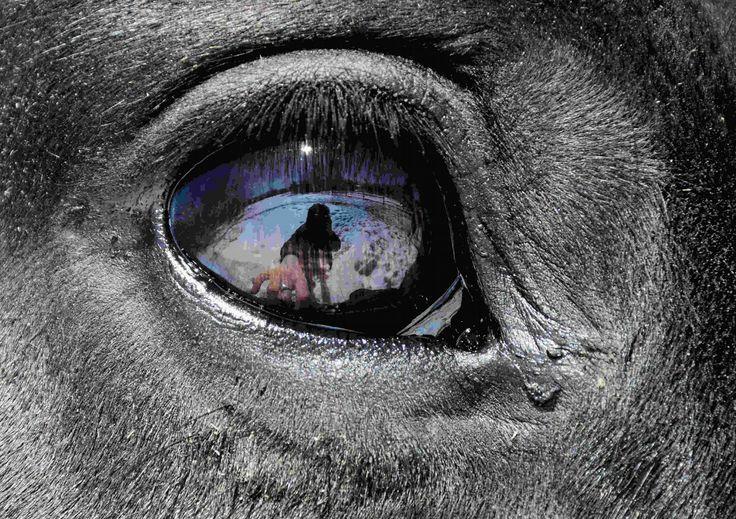 I horse by Claude Charbonneau on 500px