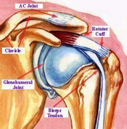 Shoulder rotator cuff injury symptoms and how to treat the pain including exercises.