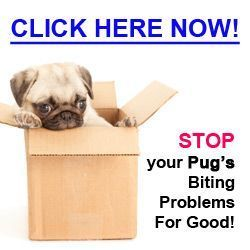 how to get a pug puppy to stop biting