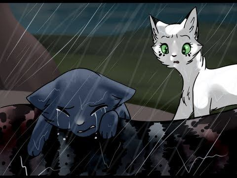 Bluestar's Skyfall - this made me sob and also friends that orange cat that looks like firestar is actually oakheart bluestars mate