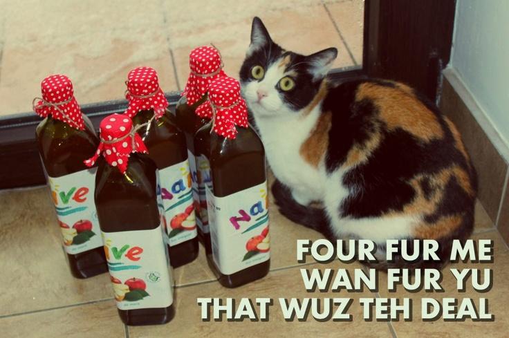 Şi Țîmuc the Cat e fan declarat Fructe Naive, aşa că noi îl răsfăţăm cum se cuvine.