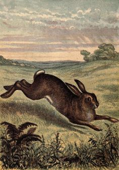 "'The Hare.' Plate from 'Tame Animals.' Published 1870 by George Routledge and Sons <a href=""http://archive.org"" rel=""nofollow"" target=""_blank"">archive.org</a>"