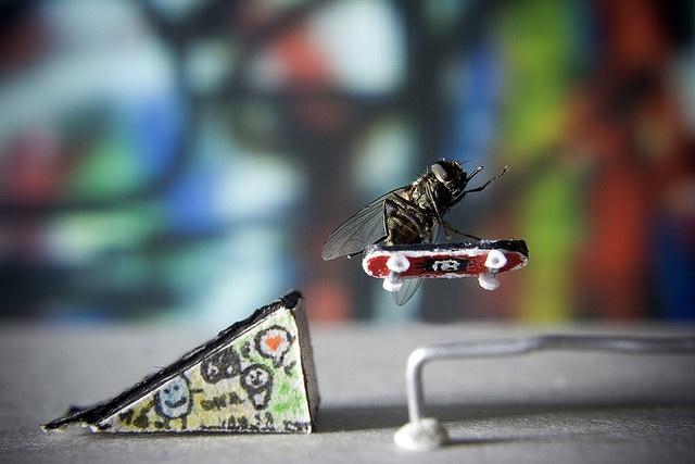 Inspiring Adventure Of Fly
