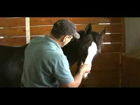Best Equine Acupressure Images On   Horse Stuff