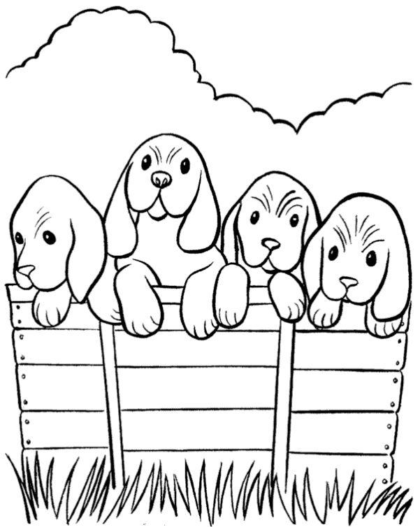 Mejores 107 imágenes de Dogs, cats, hamsters ... en Pinterest ...
