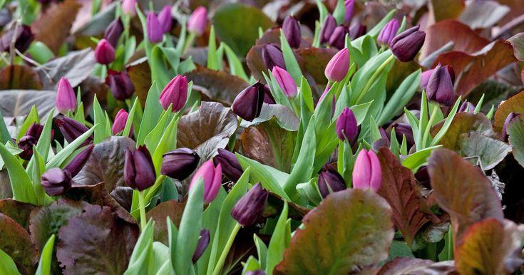 Im Ziergarten ist im März Pflanzzeit für viele Gehölze und Stauden. Außerdem steht der Rosenschnitt an und Sie sollten schon jetzt etwas gegen die bevorstehende Schneckenplage unternehmen. Welche Arbeiten im März sonst noch anstehen, lesen Sie in unsere Gartentipps.