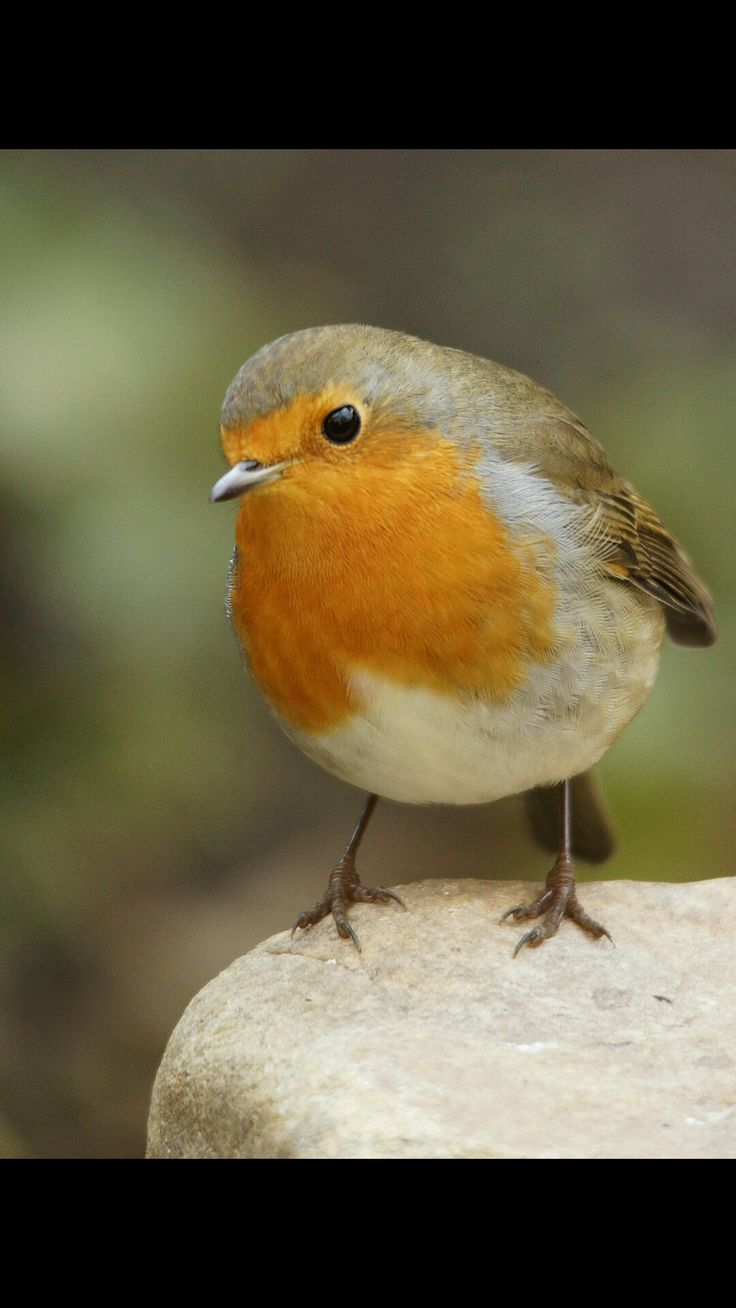 Marvelous Aufnahme im Garten v gel birds nature natur tiere
