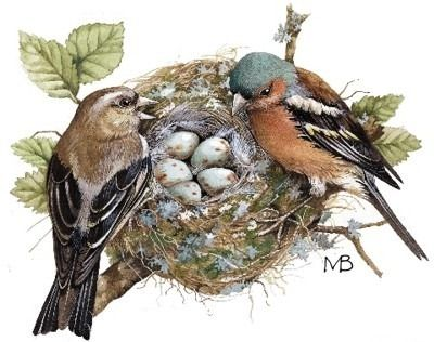 Chaffinches at the Nest by Marjolein Bastin (b.1943)