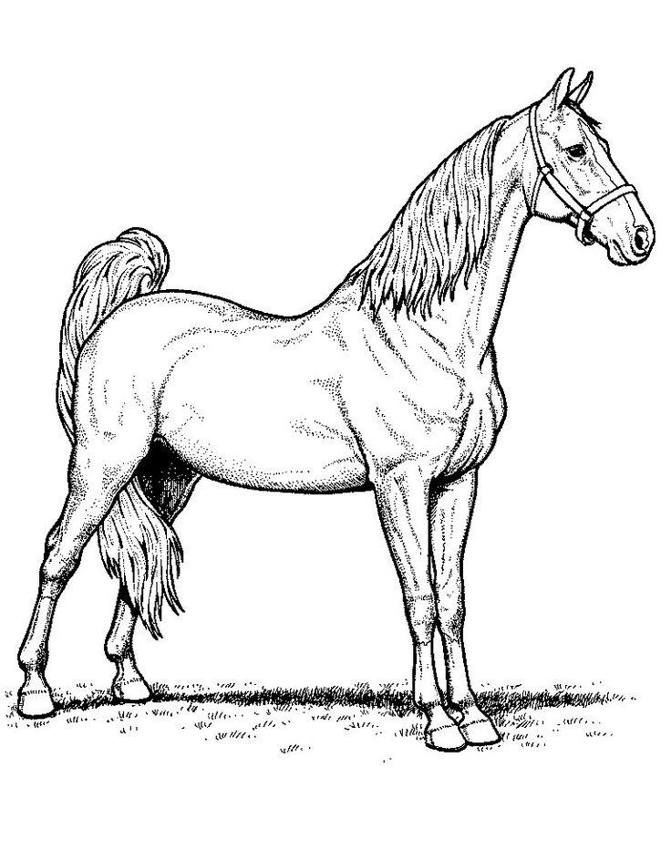Dibujo de caballos para imprimir y colorear (10 de 12) | mildibujos.com