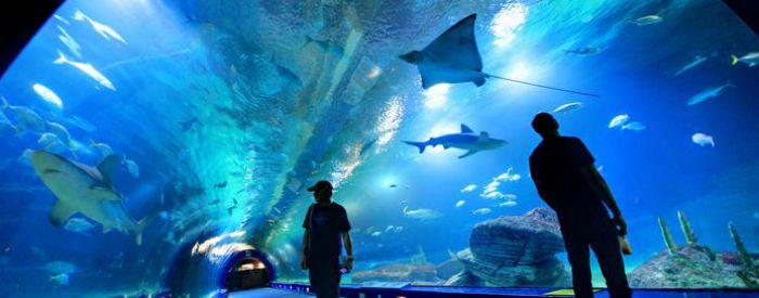 CAC pone en marcha 'Las Noches del Oceanogràfic'