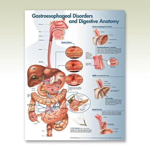 illustrates digestive system anatomy and disorders such as Barrett ...