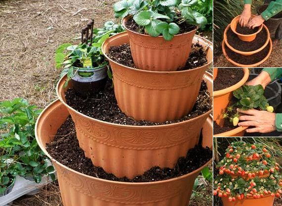 Plant Strawberries In Diy Containers Here S How Flower Pot