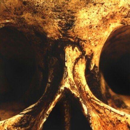 #skulls #sculpture #stilllife #skull #woodboat #adventure #adventurevisuals #seattle #washington #tattoos #tattoo #tattoosnob #tattooist #cigars #cigarsociety #craftbeer #pnwwonderland #pnwisbest #pnw #pacificnorthwestisbest #sailing #sailboat by solar_pig