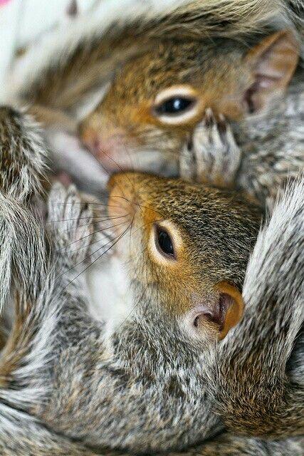 Squirrels are so cute ...