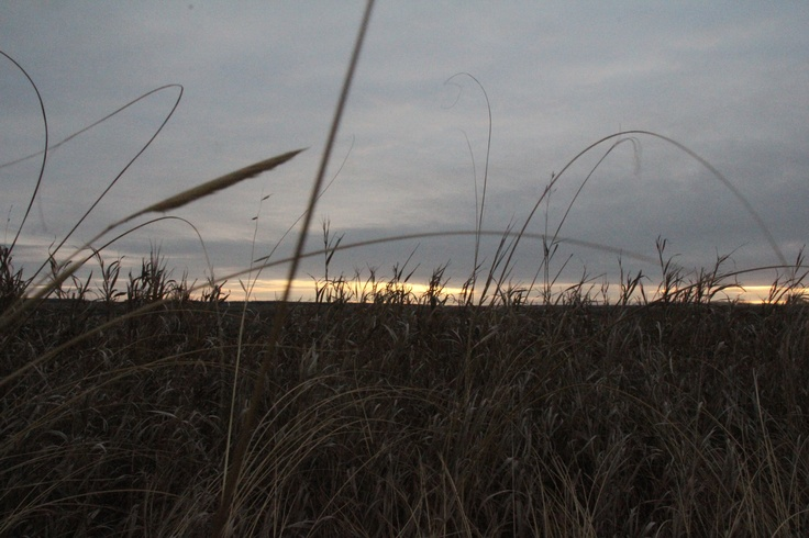 Prairie Grasses with Sunrise