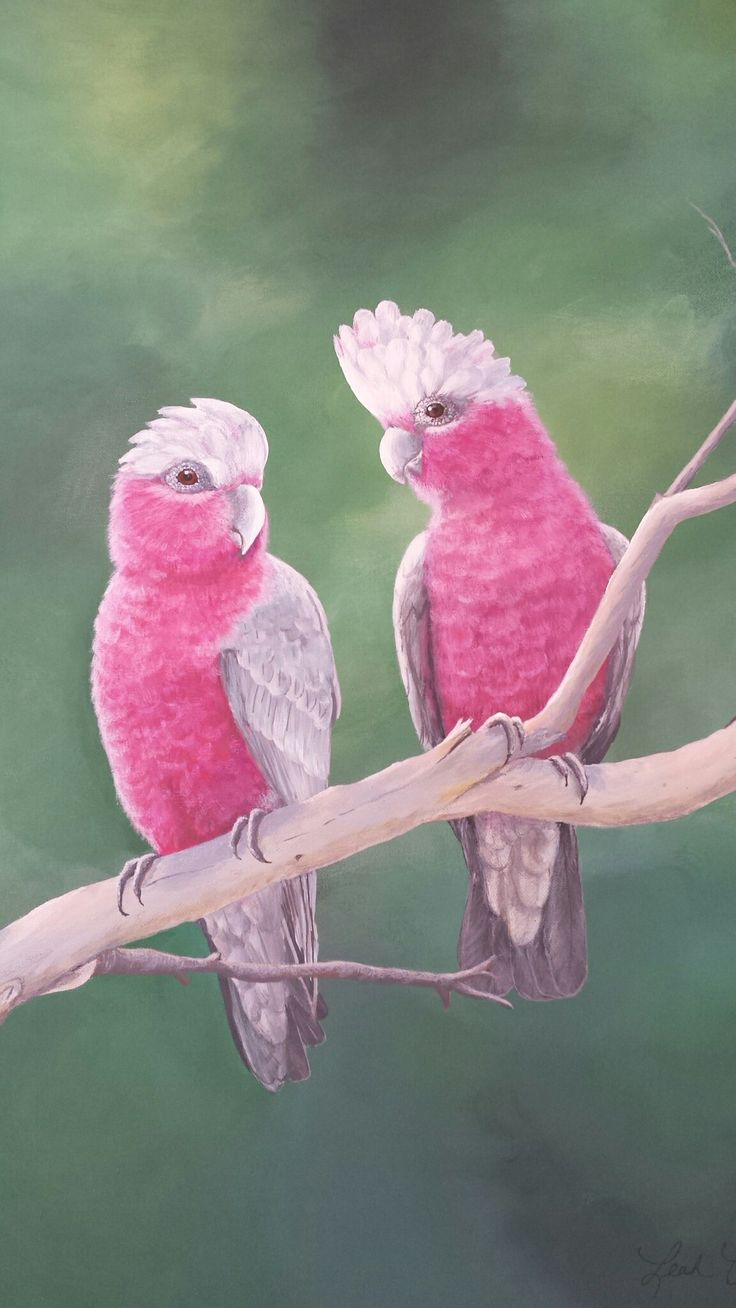 Pink and grey galahs. Again. By me.