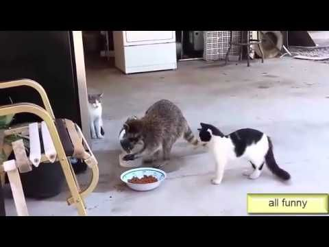 Funny Videos, Funny Cats videos , Top Funny -  #animals #animal #pet #cat #cats #cute #pets #animales #tagsforlikes #catlover #funnycats whatsapp funny videos 2015 whatsapp funny video download free whatsapp funny video punjabi whatsapp funny videos hd wh