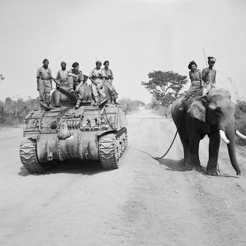 A British tank commander and Indian crew of a Sherman tank of the British 9th Royal Deccan Horse, 255th Indian Tank Brigade, encounter two civilians riding an elephant on the road to Meiktila, Burma. March, 1945.  #ww2 #wwii #britain #india #elephant #sherman #burma