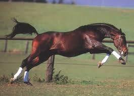 Resultado de imagen para caballos finos