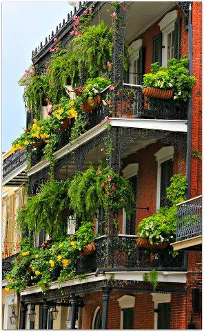New Orleans Homes and Neighborhoods » Hanging Ferns, Balconies and Gallery's make the New Orleans French Quarter a more livable and beautiful place to visit.