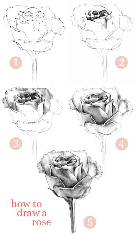 Google Image Result for http://thaneeya.com/wordpress/wp-content/uploads/2009/03/how-to-draw-a-rose-1f.jpg
