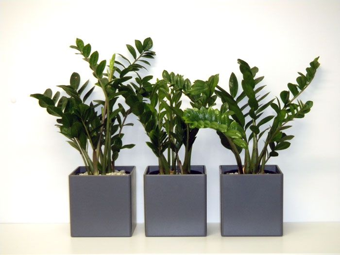 office flower pots. they may be grey but are far from dull visit wwwgreendesign office plantshome officeplanters flower pots