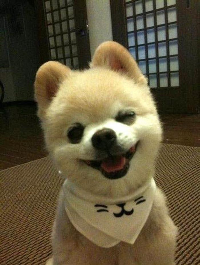 Cachorros sorridentes!                                                                                                                                                      Más