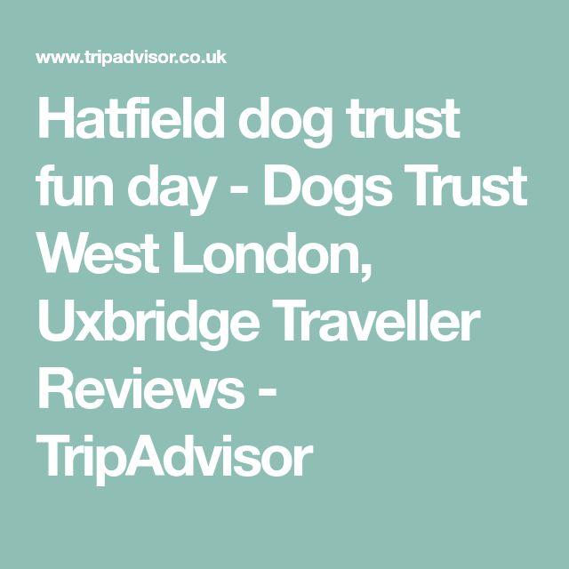 Hatfield dog trust fun day - Dogs Trust West London, Uxbridge Traveller Reviews - TripAdvisor