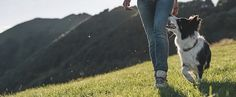Escursioni in montagna con fido. Cosa mettere nello zaino passeggiando in montagna con il nostro cane