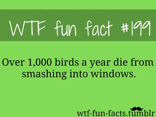 1000 images about wtf fun facts on pinterest funny for Interesting facts about crack