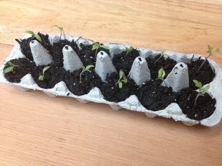 61 Best Raised Bed Gardening Images On Pinterest | Raised Bed, Raised  Gardens And Gardening Tips
