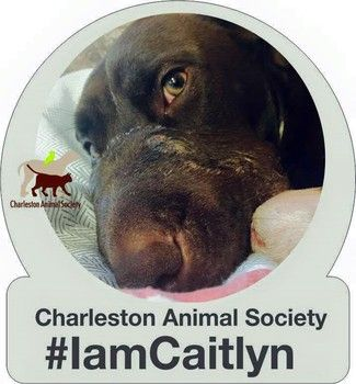 """Cast members from Bravo's """"Southern Charm"""" will throw a benefit party in honor of Caitlyn  Read more: http://www.foxcarolina.com/story/29233903/southern-charm-cast-members-host-benefit-for-dog-found-with-muzzle-taped-shut#ixzz3cG6u1SJ9"""