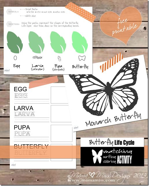 {Free Printable Butterfly Life Cycle Activities} beautiful handwriting and drawing activities to add to your learning center