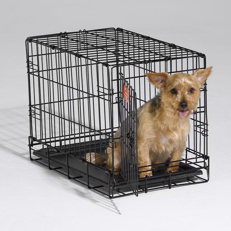 MidWest iCrate Folding Single Door Dog Crate - 1522