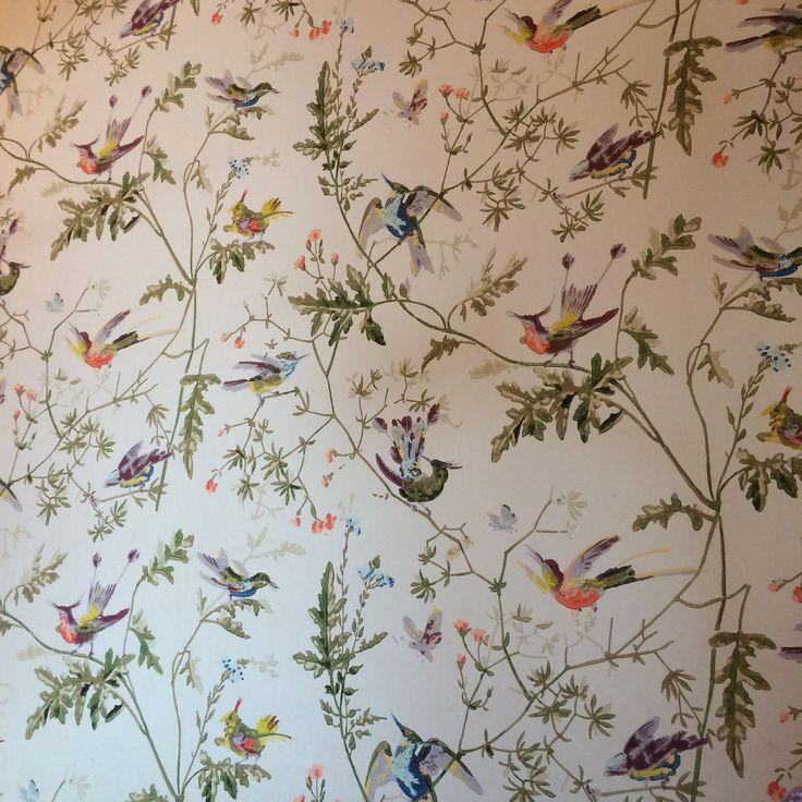 Cole & Son Hummingbird Wallpaper tapet Pinterest