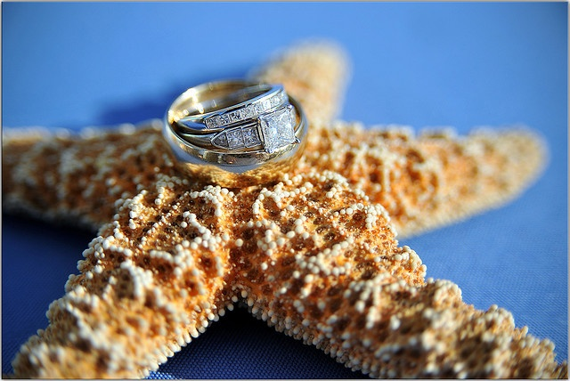beach weddings take a starPictures Ideas, Beach Themed Weddings, Starfish Rings, Beach Weddings, Wedding Rings Pictures, Rings Shots, Wedding Flower, Wedding Pictures, Sands Dollar