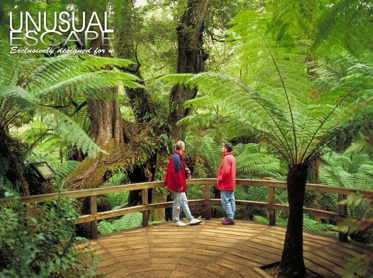 Great Ocean Road Rain-forest Eco Tour