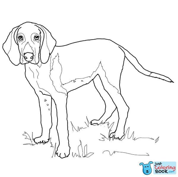 American Foxhound Coloring Pages The Fox And The Hound American Foxhound Dog Coloring Page