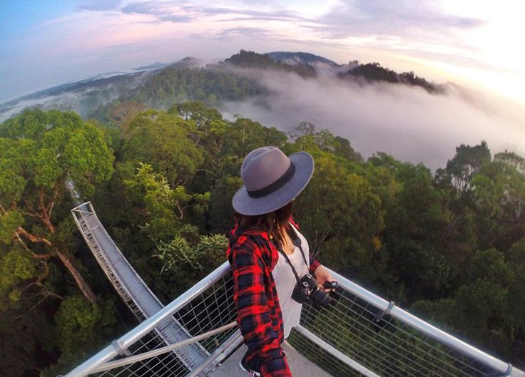 Canopy Walk - Brunei