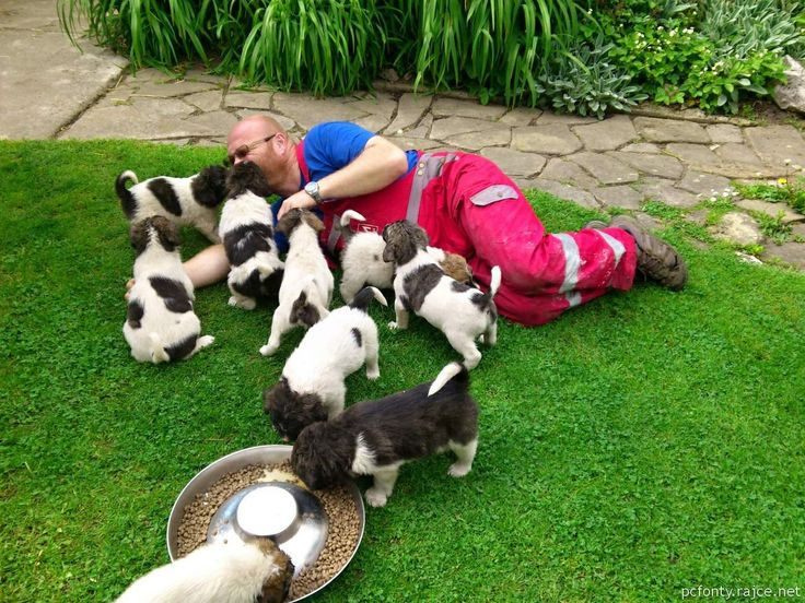 Puppies are attacking ! : - ) Breeder filled up with love : - ) Our puppies from the kennel Czech hope