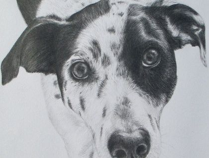 Pet or Person Pencil Portraits