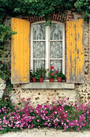 shabby yellow shutters, red flowers, ivory lace