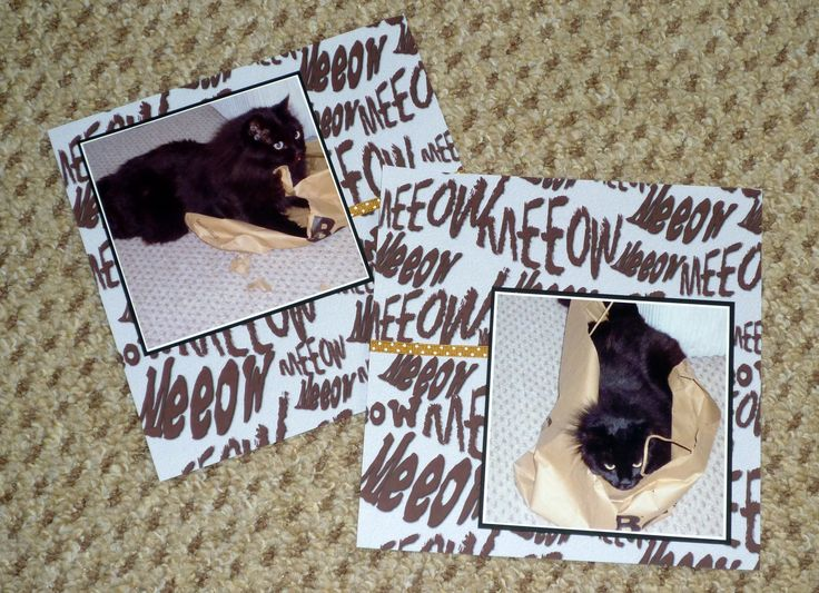 created by Valerie Boyle... two scrapbook pages of Felix, our cat