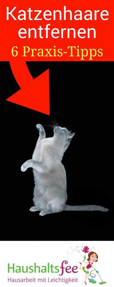 Katzenhaare entfernen: 6 praxiserprobte Tipps für dich | Haushaltsfee – Hausarbeit mit Leichtigkeit ❤️