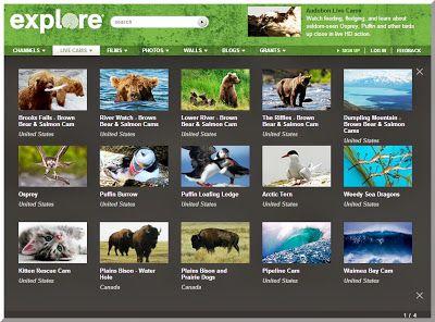 Skolestuen: Følg dyreliv LIVE med Explore og Animal Planet