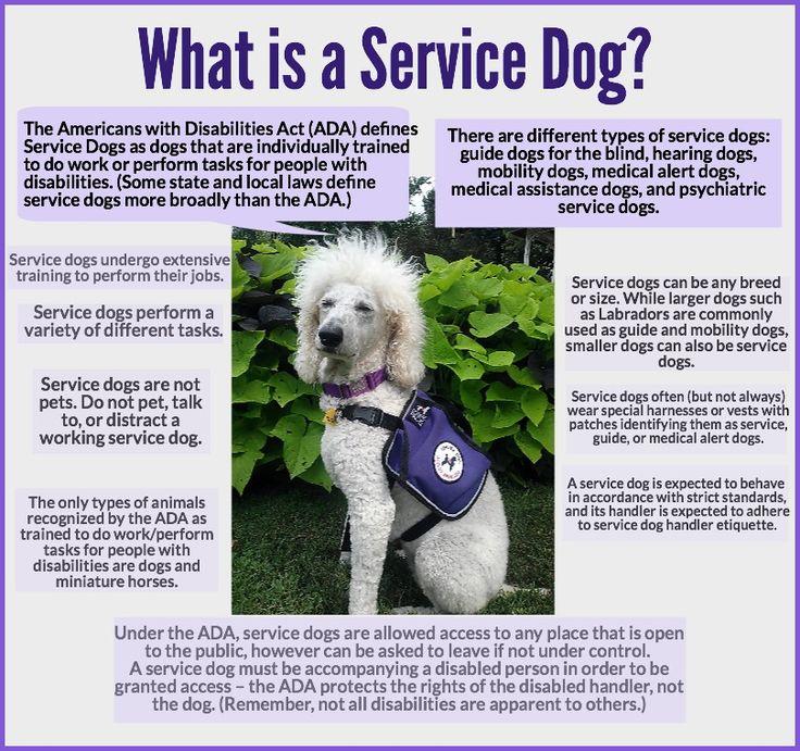 Secret service canine opportunities