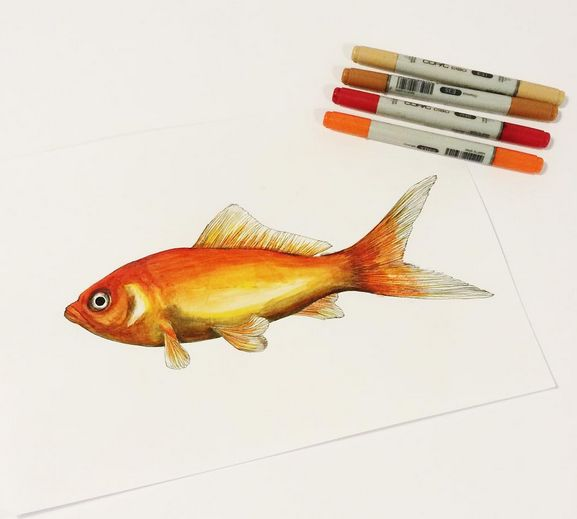 #fish #paintings #illustration #petzandfriends #pets #copic #drawings #goldfish