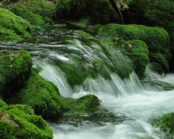 La Luz Verde: 23 de Abril, Día del Libro: Dos poemas del agua