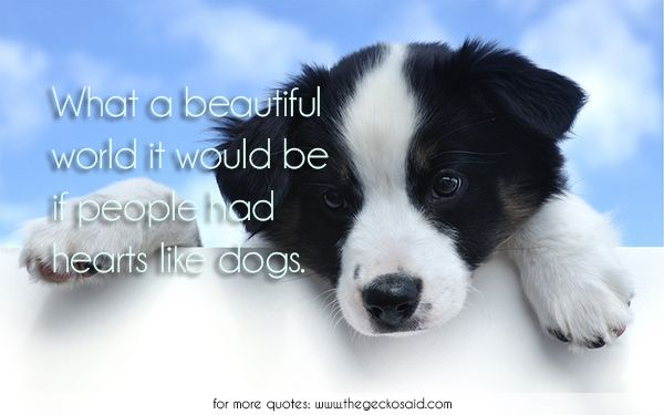 What a beautiful world it would be if people had hearts like dogs.  #animals #beautiful #dogs #hearts #people #quotes #world