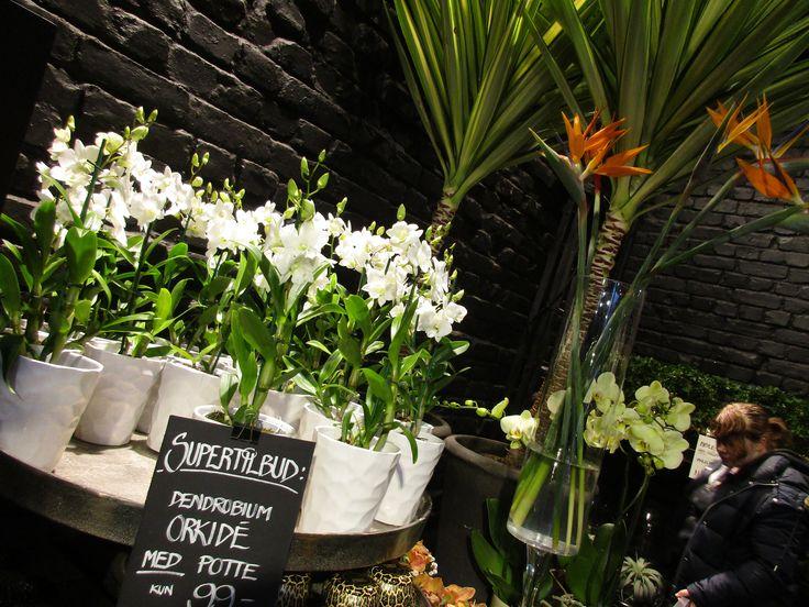 Hvite blomster i hvite vaser